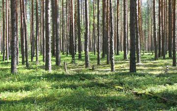 Земельный участок на Рублёвке